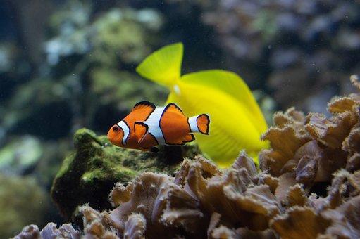 Saltwater, Salt Water, Fish, Ocean, Animal, Wildlife