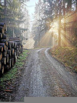 Nature, Forest, Trees, Light, Mist, Woods, Fog