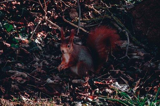 Spring, Squirrel, Animal, Nature, Tree, Animal World