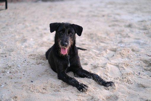 Dog, Beach, Pets, In The Sand, Animals, Enjoy