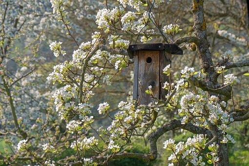 Bird Feeder, Aviary, Nesting Box, Tree, Flowers, Spring