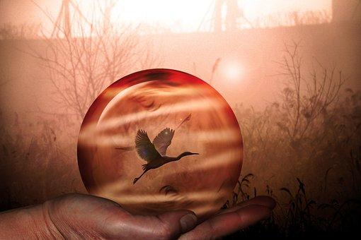 Crystal Ball, Ball, Bird, Crystal, Heron, Glass Ball