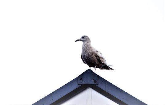 Bird, Minimal, On The Roof, Tile
