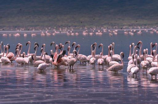 Flamingo, Flamingos, Pink, Birds, Nature, Flamingoparty