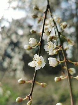 Flower, Spring, Bloom, Blooming, White, Tree, Energy