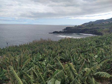Path, Hiking, Caldera, Bananas, Sea, La Palma
