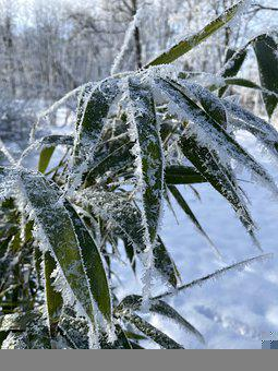 Bamboo, Ice, Crystal, Winter, Cold, Nature, Frozen