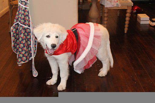 Christmas Puppy, Cute Outfit, Santa