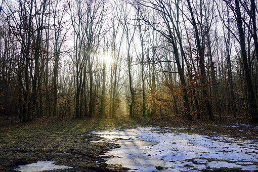 Dusk, Forest, Landscape, Trees, Sunrise, Tree, Fog