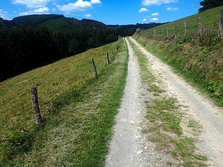 Eifelsteig, Eifel, Vulkaneifel, Nature, Hiking