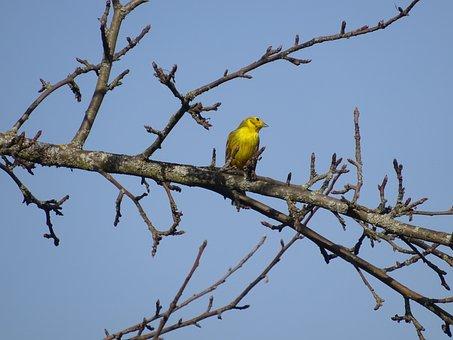 Greenfinch, Bird, Animal World, Spring, Sky, Feather
