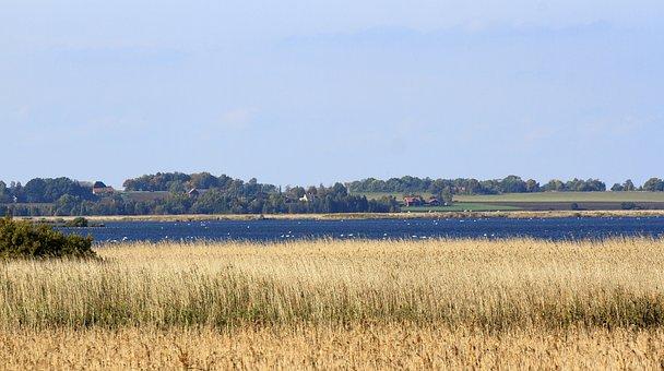 Rural, Suburban, Lagoon, Fields, Vegetation