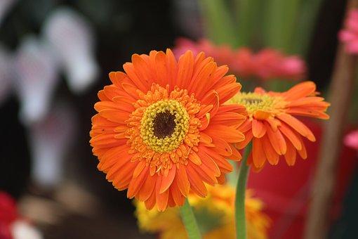 Flower, Hd, Photos, Blossom, Outdoors, Flora, Nature