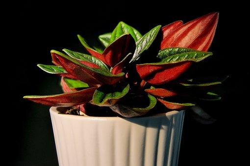 Plant, Pot, Leaves, Flowerpot, Potted Plant