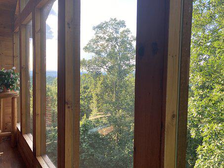 Nice, View, Forest
