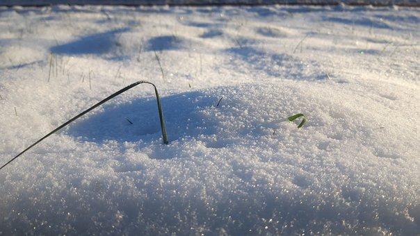 Winter, Cold, Snow, Grass, Ice, Nature, Frozen, White