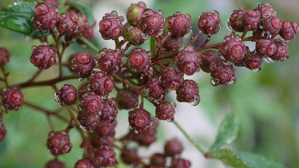 Blueberries, Berries, Food, Fruit, Fruits, Healthy