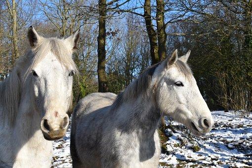Horses, Carried Horses, Equines, Horseback Riding