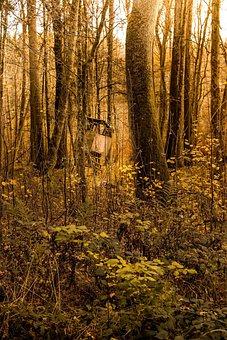 Landscape, Les Hunter, Forest