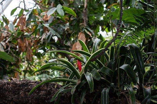 Tropical, Plants, Jungle, Nature, Leaves, Flora