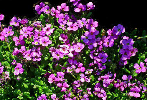 Little Flowers, Spring, Garden, Nature, Closeup