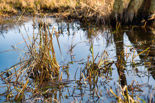 Water, Plant, Nature, Green, Meadow, Flora, Close Up
