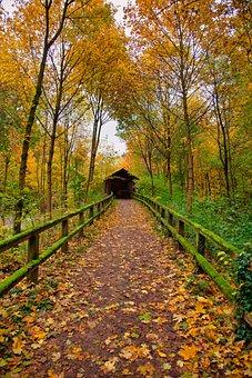 Path, Autumn, Nature