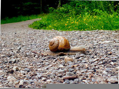 Slug, Path, Snail, Nature, Animal, Slimy, Forest