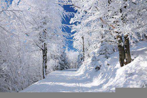 Path, Winter, Snow, Nature, Landscape, White, Trees