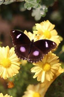 Butterfly, Nature, Butterflies, Aesthetic, Cute, Pretty