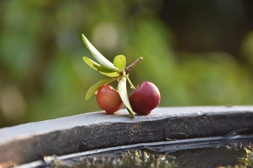 Cherries, Fruits, Ripe, Red, Fresh, Red Cherries