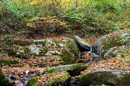 Creek, Rocks, River, Stream, Nature, Landscape, Forest