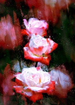 Flowers, Rose, Love, Romantic, Pink, Plants, Nature