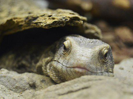 Tortoise, Animals, Sea, Fauna, Water, Ocean, Reptile