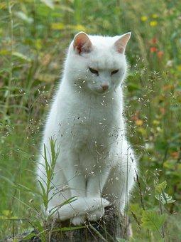 Cat, Summer, Meditation