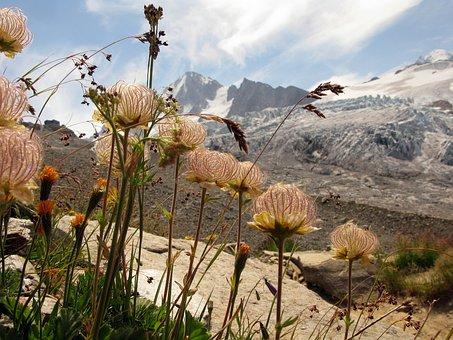 Alps, Summer, Chamonix, France, Europe, Flowers