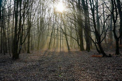 Forest, Sunrise, Fog, Trees, Sun, Sunlight, Dawn, Path