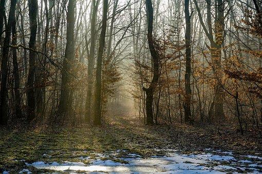 Forest, Sunrise, Fog, Snow, Trees, Sunlight, Dawn, Path