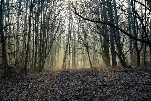 Forest, Sunrise, Fog, Trees, Sunlight, Dawn, Path