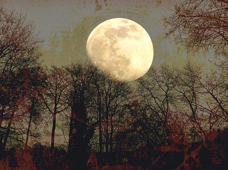 Moon, Mond, Fantasy, Sky, Tree, Dream, Moonlight