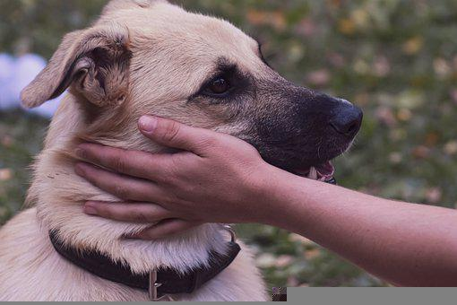 Dog, Pet, Hand, Petting, Animal, Friend, Face, Stroke