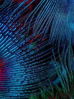 Feathers, Fractal, Energy, Abstract, Painting, Artistic