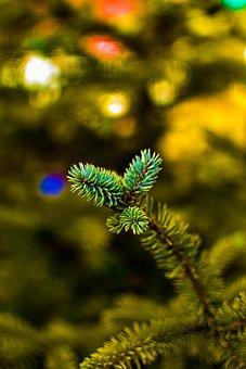 Firs, Branch, Tree, Pine, Christmas Tree, Winter
