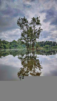 Reflections, Tree, Water, Heart, Sky, Clouds, Nature