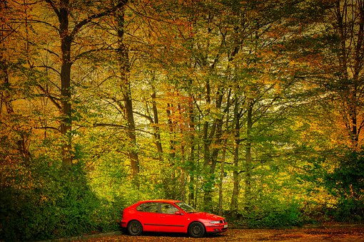 Car, Parking Lot, Forest, Trees, Fall, Autumn, Red Car
