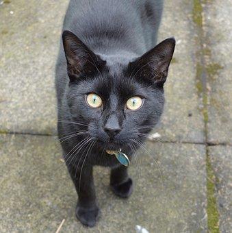 Cat, Feline, Black Cat, Mammal, Animal, Pet, Domestic