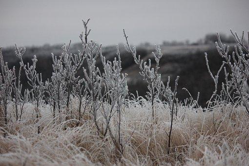 Frost, Landscape, Winter, Snow, Frozen, Nature, Wintry