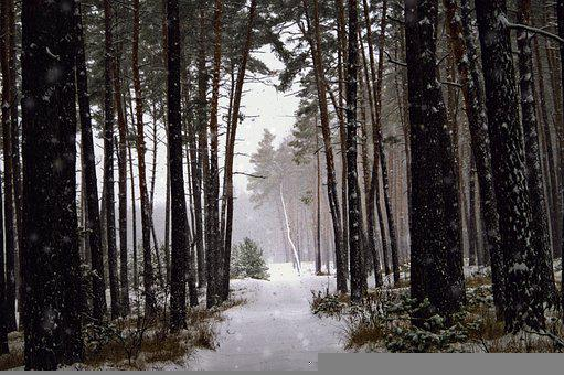 Forest, Nature, Snow, Forests, Landscape, Trees, Tree