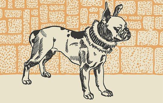 Dog, Pet, Animal, Mammal, Graphic, Friend, Purebred