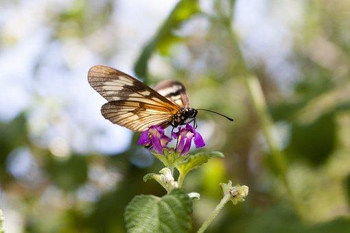 Mariposa, Flores, Polinizador, Naturaleza, Butterfly